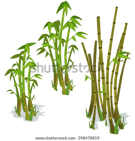 The stems and leaves of bamboo on a white background. Vector illustration.