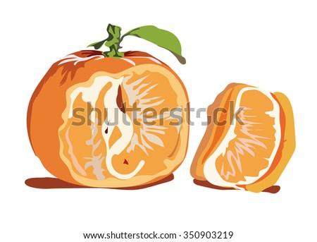 the tangerine - stock vector