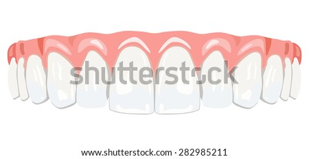 The top row of white teeth - stock vector