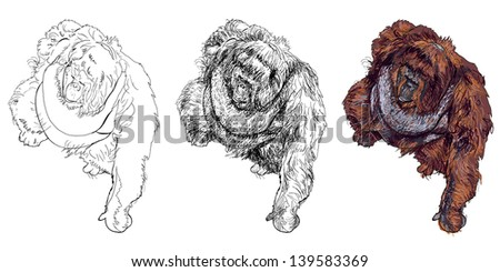 The vector drawing style of orangutan