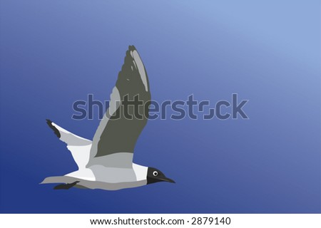 The vector image of the flying seagull - stock vector