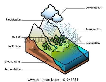 Water Cycle Showing Evaporation Transpiration Condensation Stock ...