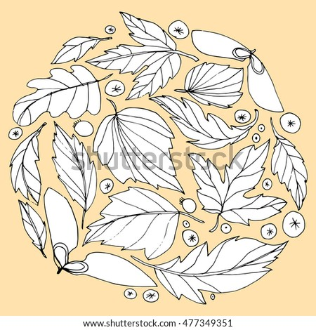The wreath of fallen leaves. The leaves of trees. Autumn leaves. Circle of leaves. The leaves and berries. Line art. Drawing by hand. Graphic arts. Doodle.