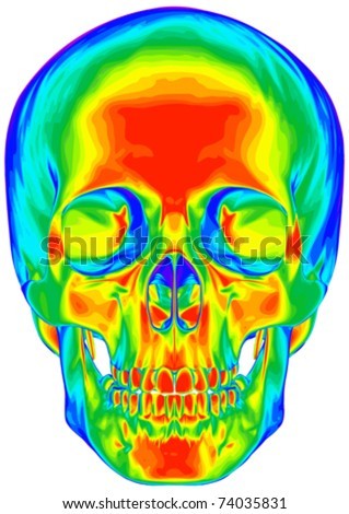 Thermal image of the human skull, isolated on white background - stock vector