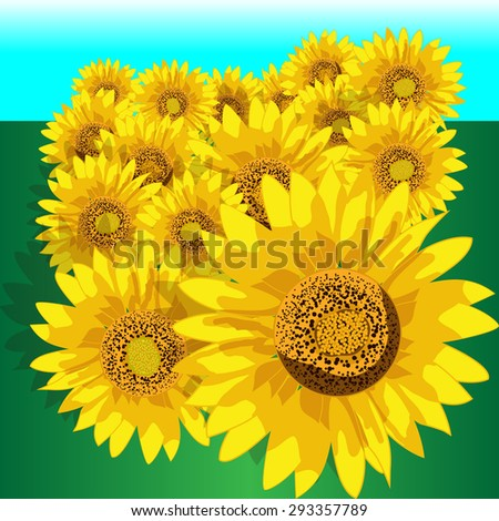 These are sunflowers on a simplified background.