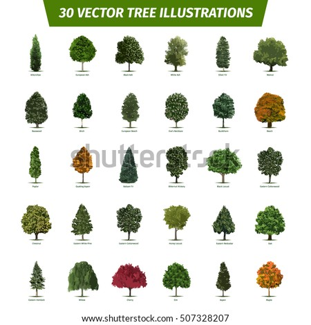 Thirty Different Tree Sorts With Names Illustrated Types And Specimens Ash Fir