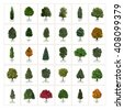 Thirty different vector tree illustrations. Arborvitae, European Ash, Black Ash, White Ash, Silver Fir, Chestnut, Eastern White Pine, Cottonwood and Honey Locust trees. - stock vector