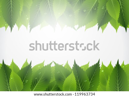 This image represents a green leaf background. / Leaf Background