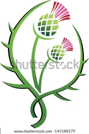 Scottish Thistle Symbol Thistle illustration floral