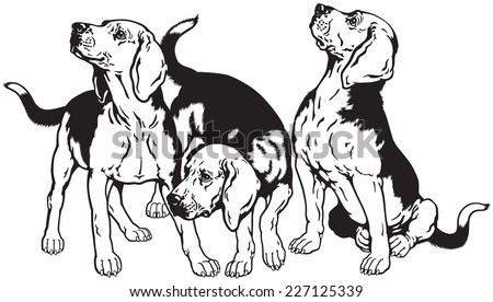 three beagle hounds, hunting dogs breed, black and white image  - stock vector