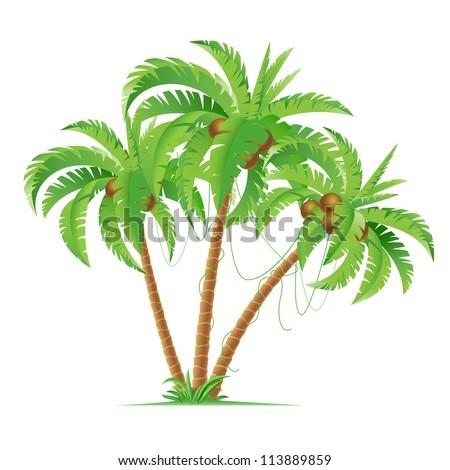 Three cartoon coconut palms.  Illustration on white background - stock vector