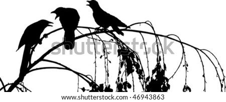 three crows arguing on branch - stock vector