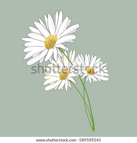 Three daisies. Vector illustration on light green background