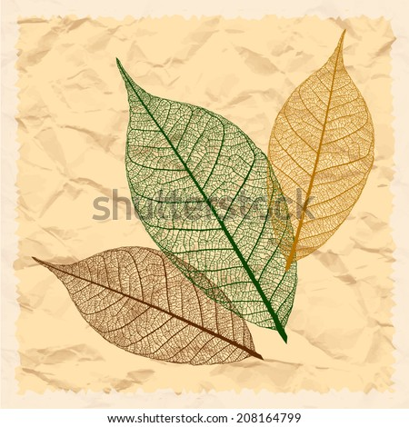 Three dry vector leaf on the grunge background - stock vector