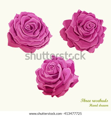Three roses buds illustration. Hand drawn. Can be used in design, appearance, background, greeting card, etc. Vector- stock.