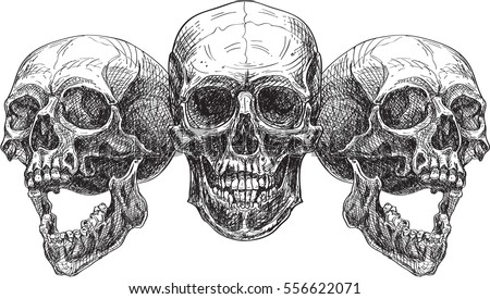 Three skulls. Engraving style. Isolated on white