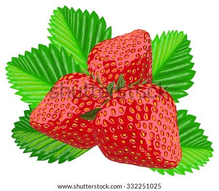 Three strawberries with leaves, vector illustration, isolated on white, all objects on separate layers - stock vector