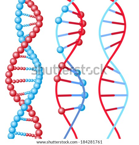 three types of DNA molecules in red and blue colors. - stock vector