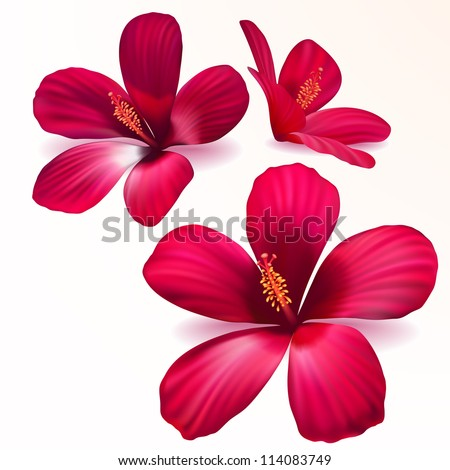 Three vector realistic purple flowers - stock vector
