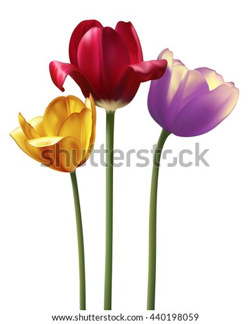 Three vector realistic tulips isolated on white - stock vector