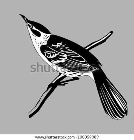 thrush silhouette on gray background, vector illustration - stock vector