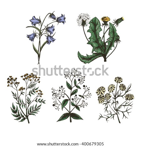 Thumbnail sketch of wild flowers and plants, herbs. Set of Color vector illustration isolated on white background - stock vector