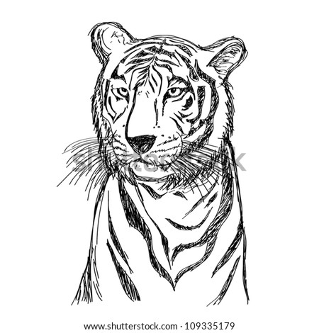 Tiger Drawing - stock vector