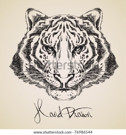 tiger drawing high quality vector - stock vector