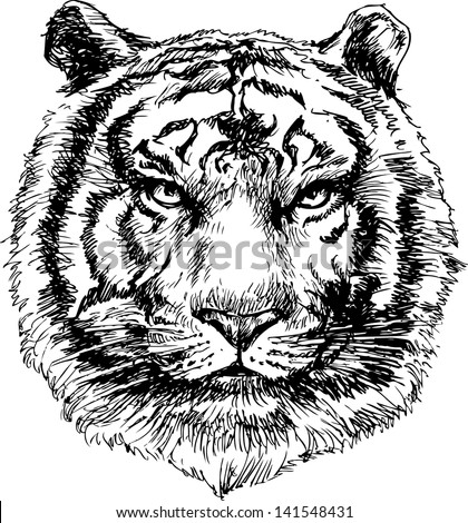 Tiger head hand drawn - stock vector