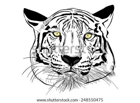 Tiger head sketch with Vector EPS10 - stock vector