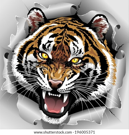 Tiger Roar coming out from Torn Paper - stock vector