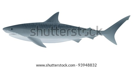 """Tiger Shark (Galeocerdo cuvier) saltwater fish.  """"Full compatible. Created with gradients."""" - stock vector"""