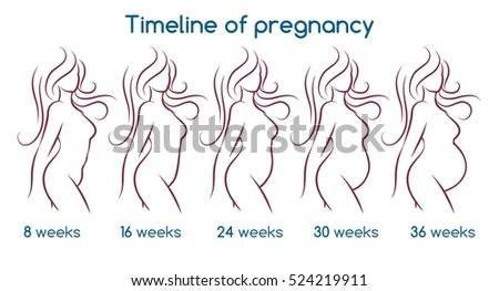Timeline of pregnancy with line woman silhouette. Vector illustration