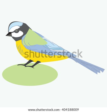 Tit bird. Titmouse. Vector illustration of a titmouse bird, isolated on white background.