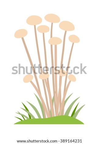 Toadstool illustration. Mushrooms toadstool on a white background. Mushroom toadstool. Toadstool toxic fairy natural. Toadstool vector. Toadstool isolated on white. - stock vector