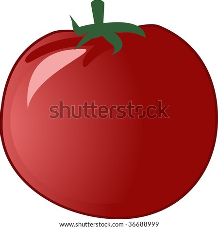 Tomato isolated over white. Vector illustration
