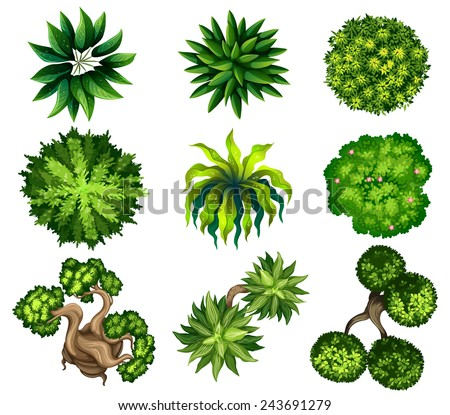 Topview of the different plants on a white background - stock vector