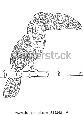 Toucan Color Drawing Stock Images Royalty Free Images Vectors