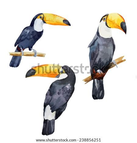 toucan, bird, watercolor - stock vector