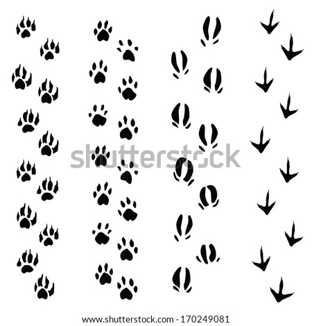Trails of animals steps isolated on white background (vector illustration) - stock vector