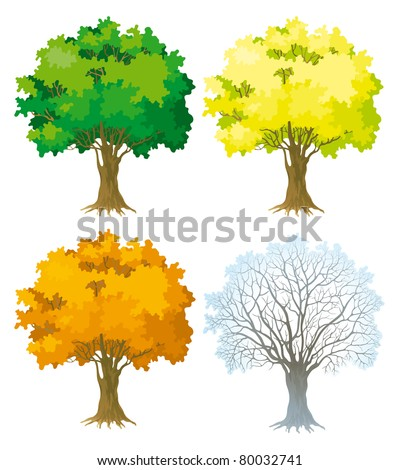 Tree at four seasons. Trees with green, yellow and orange leaves. Tree without leaves at winter.
