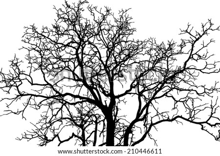 tree branch black shadow, eps vector. - stock vector