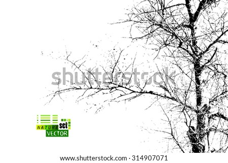 tree branch silhouette. Vector - stock vector