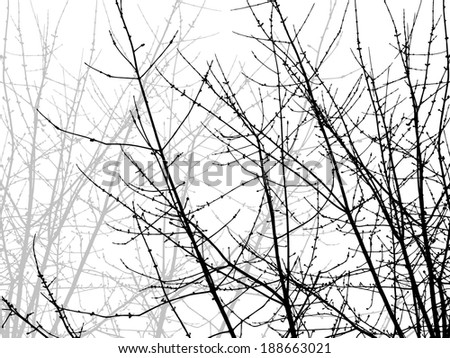 tree branch. Vector  - stock vector