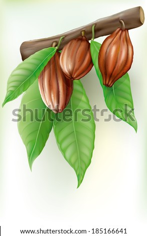 tree branch with fruits and leaves of cacao - stock vector