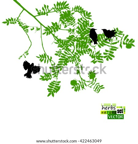 tree branch with leaves vector. tree branch with leaves and birds. vector