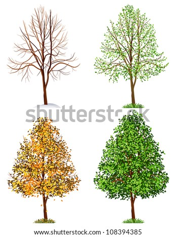 tree,  four seasons - stock vector
