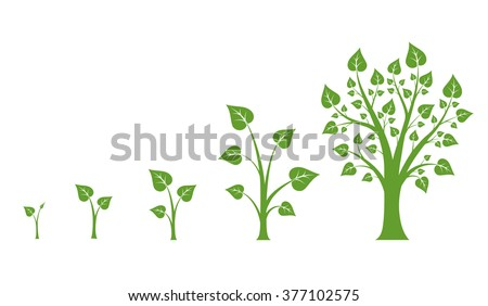 Tree growth vector diagram. Green tree growth, nature leaf growth, plant growth illustration - stock vector