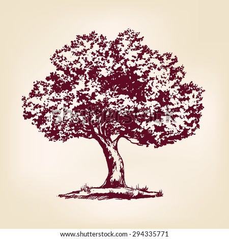 Tree hand drawn vector llustration realistic sketch - stock vector
