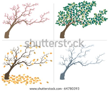 Tree shown during the four seasons.